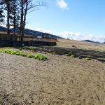 敷地内の畑